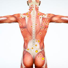 オリンピック委員医科学鍼灸師トレーナーによる筋膜講座案内
