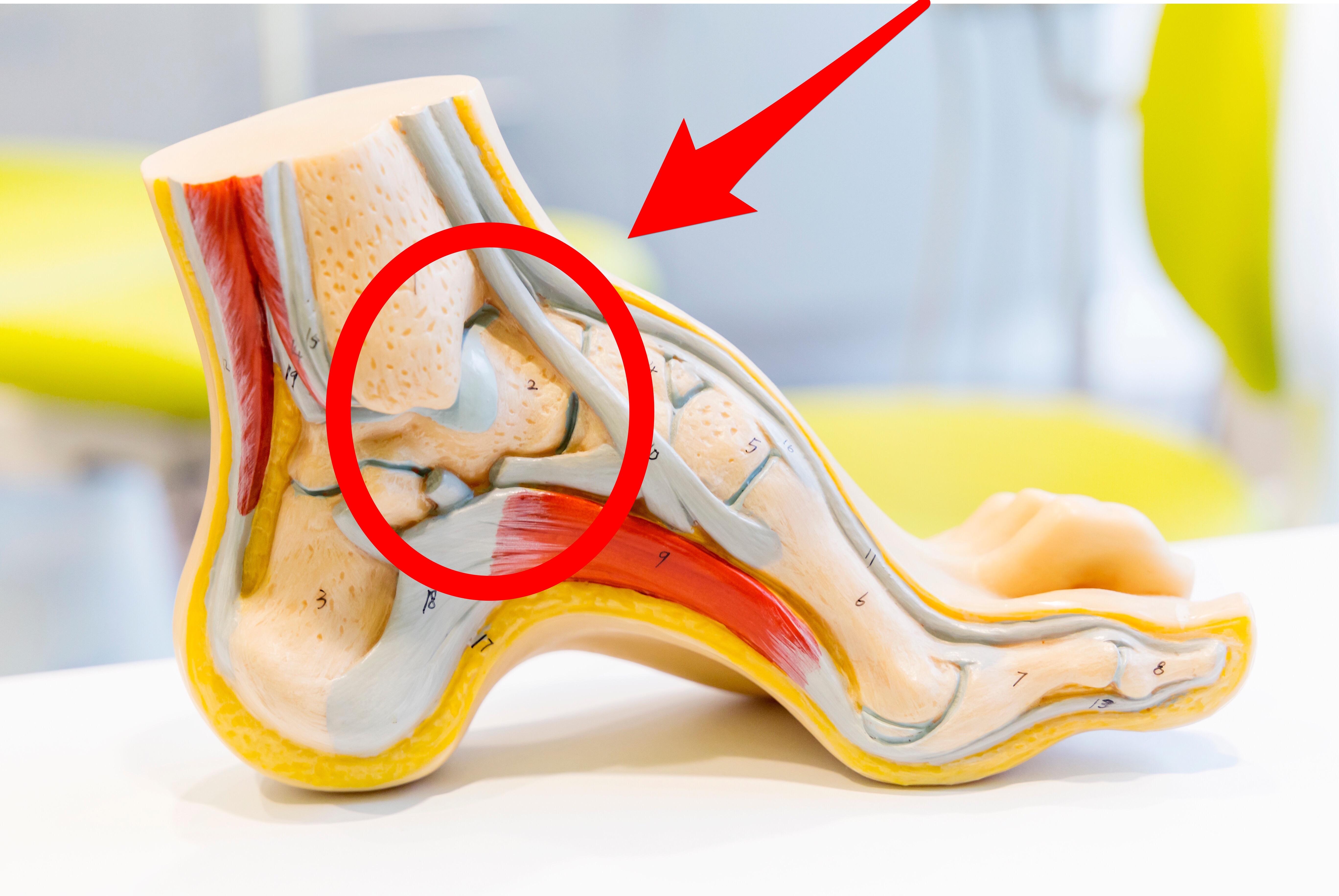 腰のヘルニア、狭窄症、すべり症も合わせて持病がある方が、フラメンコで腰が痛くならなくなったのは、足裏からの機能改善にありました